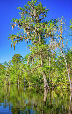 Cypress Swamp Photograph - Giant Cypress 2 by Steve Harrington