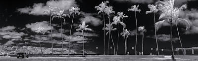Infra-red Photograph - Giant Dandelions. by Sean Davey