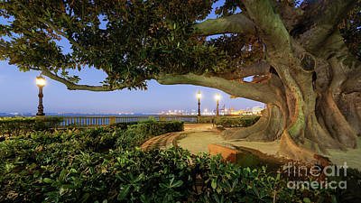 Photograph - Giant Ficus Alameda Apodaca Blue Hour Cadiz Spain by Pablo Avanzini