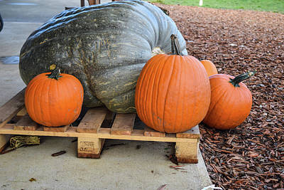 Photograph - Giant Giant Gray Pumpkin And Siblings by Tom Cochran