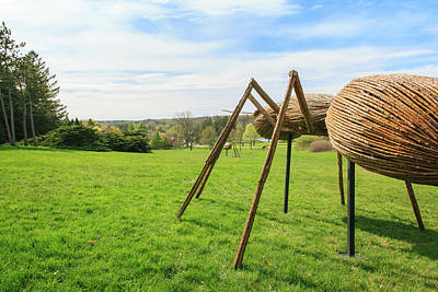 Photograph - Giant Lawn Ants by Joni Eskridge