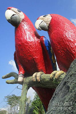 Macaw Photograph - Giant Macaws by Randall Weidner