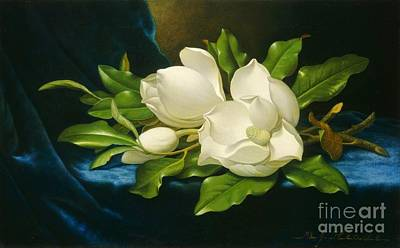 Blue Velvet Painting - Giant Magnolias On A Blue Velvet Cloth by MotionAge Designs