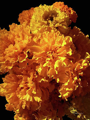 Photograph - Giant Marigolds by Harold Zimmer