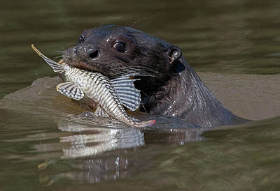Photograph - Giant Otter #1 by Wade Aiken