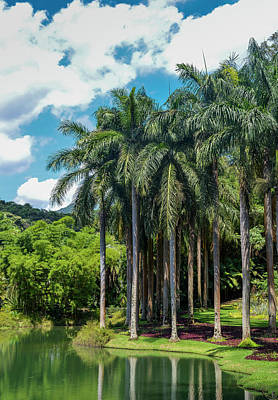 Photograph - Giant Palm Trees In Brazil by Alexandre Rotenberg