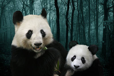 Giant Pandas Art Print by Julie L Hoddinott