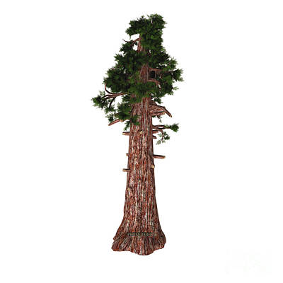 Coniferous Painting - Giant Redwood Tree by Corey Ford