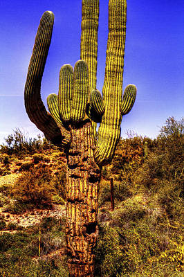Photograph - Giant Saguaro Cactus Against A Barbed Wire Boundary Fence by Roger Passman