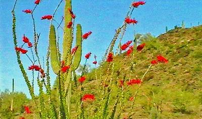 Photograph - Giant Saguaro Cactus Behind Blooming Ocotillo by Judy Kennedy