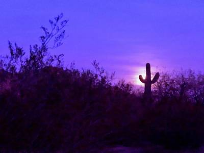 Photograph - Giant Saguaro Cactus Super Moonrise 1 by Judy Kennedy