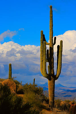 Giant Saguaro In The Southwest Desert  Print by James BO  Insogna