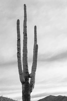 Photograph - Giant Saguaro by Scott Rackers