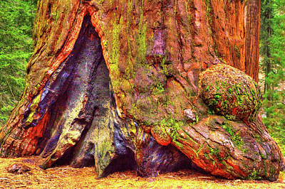 Photograph - Giant Sequoia Base With Fire Scar by Roger Passman