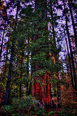 Photograph - Giant Sequoia In The Giant Forest by Roger Passman