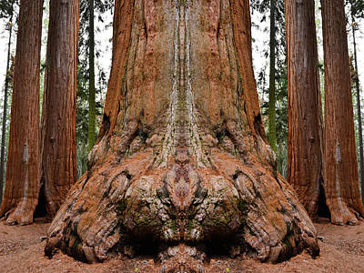 Photograph - Giant Sequoia Mirror by Kyle Hanson