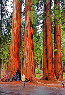Giant Sequoias Art Print by Dennis Cox