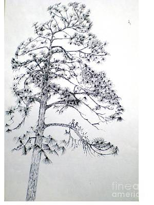 Giant Silver Pine Tree Art Print by Hal Newhouser