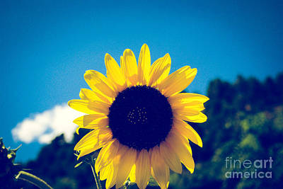 Day Photograph - Giant Sunflower by Gloria Pasko