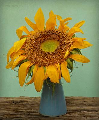Photograph - Giant Sunflower Still Life On Blue by Chris Berry
