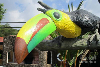 Toucan Photograph - Giant Toucan by Randall Weidner