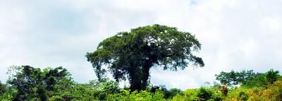 Amazon Photograph - Giant Tree In Amazon Skyline by HQ Photo