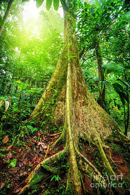 Photograph - Giant Tree In Rainforest by Anna Om