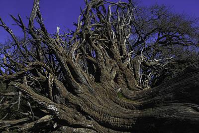 Giant Tree Roots Art Print