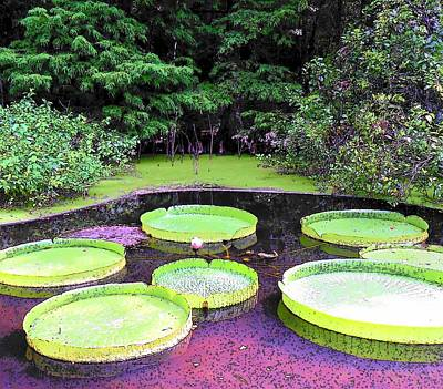 Photograph - Giant Victoria Water Platter by Sheri McLeroy