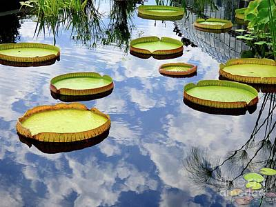 Photograph - Giant Water Lily Pads by Jean Wright