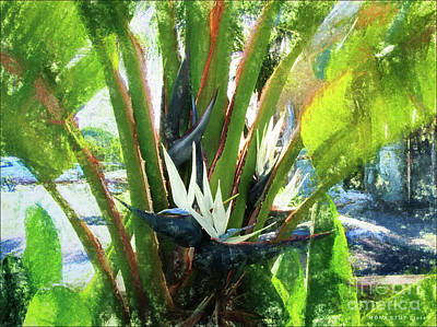 Giant White Bird Of Paradise Tree Art Print