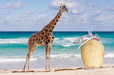 Photograph - Such A Pleasant Beach Surprise by Les Palenik