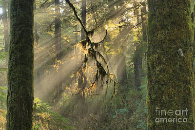 Photograph - Giants And Light Beams by Adam Jewell