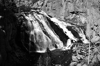 Photograph - Gibbon Falls Cascade Into Gibbon River In Yellowstone National Park Black And White by Shawn O'Brien