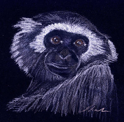 Ape Drawing - Gibbon by Julie L Hoddinott