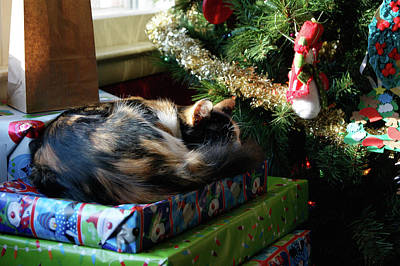 Photograph - Gift Cat by Victor Wiebe
