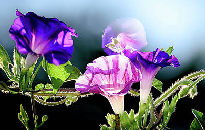 Photograph - Gifts From My Garden by Camille Lopez