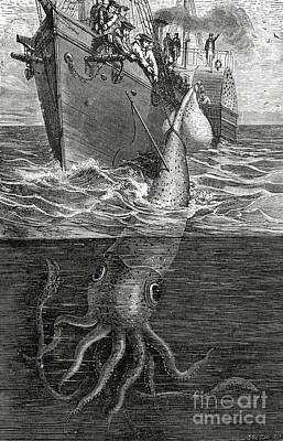 Hunters Drawing - Gigantic Cuttle Fish by English School