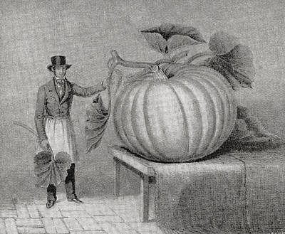Circumference Drawing - Gigantic Gourd Grown By John Thomas by Vintage Design Pics