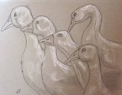 Drawing - Giggle Of Geese by Barbara O'Toole
