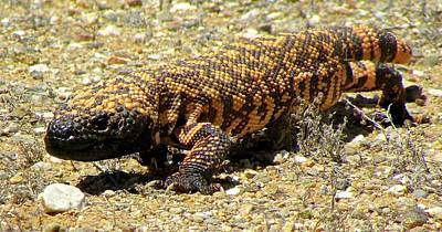 Photograph - Gila Monster On The Prowl by Brenda Pressnall