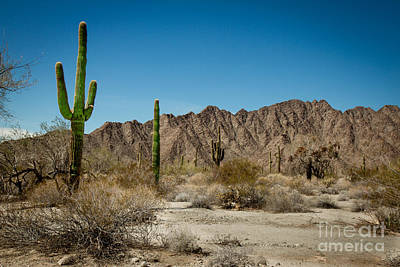 Photograph - Gila Mountains And Sonoran Desert by Robert Bales