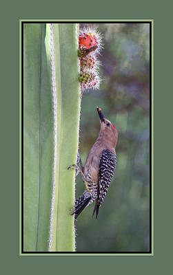 Photograph - Gila Woodpecker 0547-051318-1cr-matte by Tam Ryan