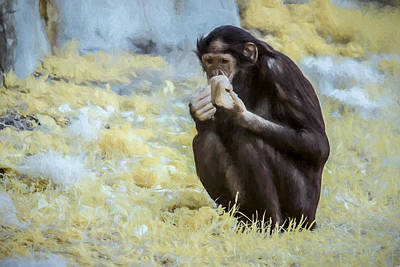 Ape. Great Ape Painting - Gilda The Bonobo by HD Lofton