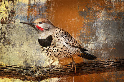 Photograph - Gilded Flicker by Barbara Manis