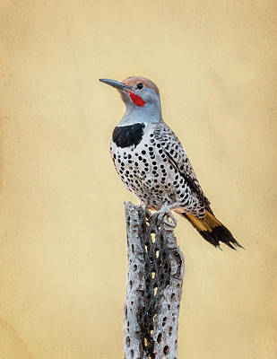Photograph - Gilded Flicker by James Capo