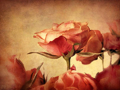 Photograph - Gilded Roses by Jessica Jenney