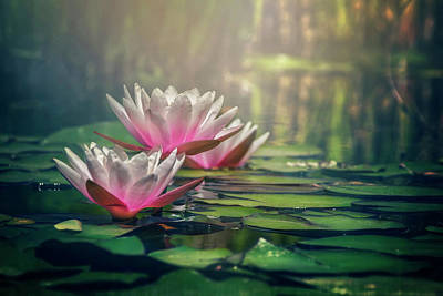White Water Lilies Photograph - Gilding The Lily by Carol Japp