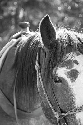 Photograph - Gillagan The Horse In Glacier National Park   by John McGraw