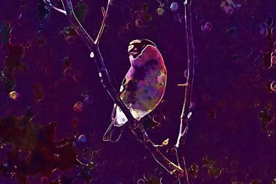 Digital Art - Gimpel Pyrrhula Pyrrhula Blood Fink  by PixBreak Art